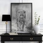 Poster Leopard Svartvit