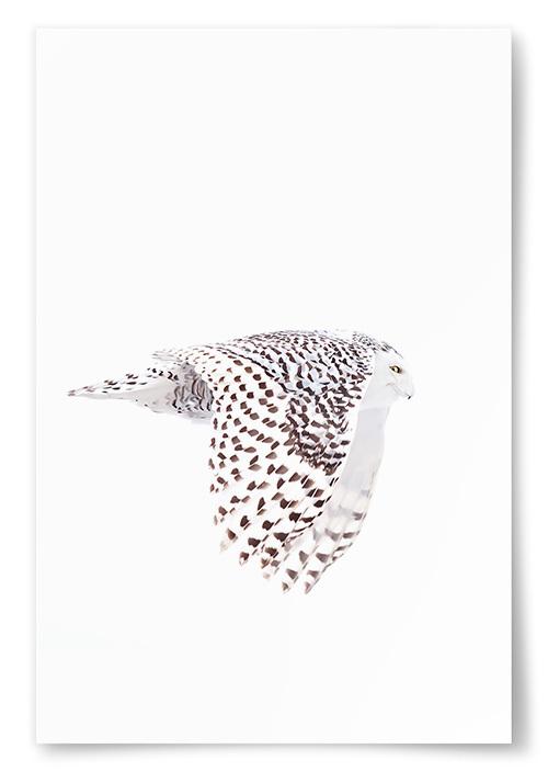 Poster Flygande Uggla No1