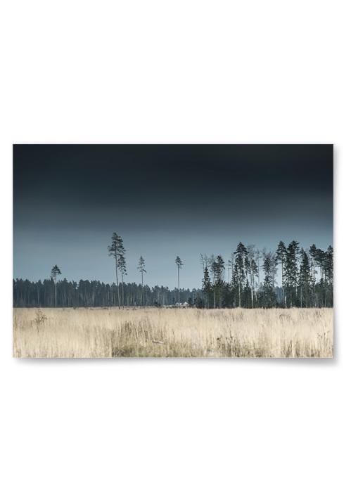 Poster Tallskog och Äng