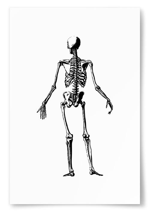 Poster Skelett Bakifrån