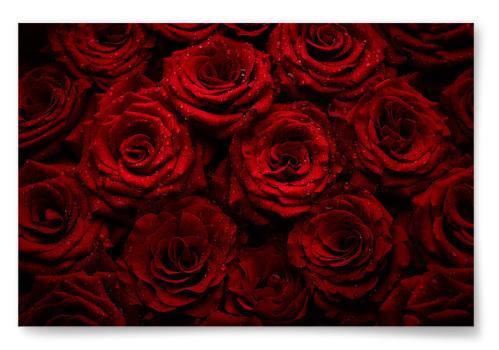 Poster Röda Rosor Horisontell