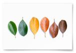 Poster Löv på Rad