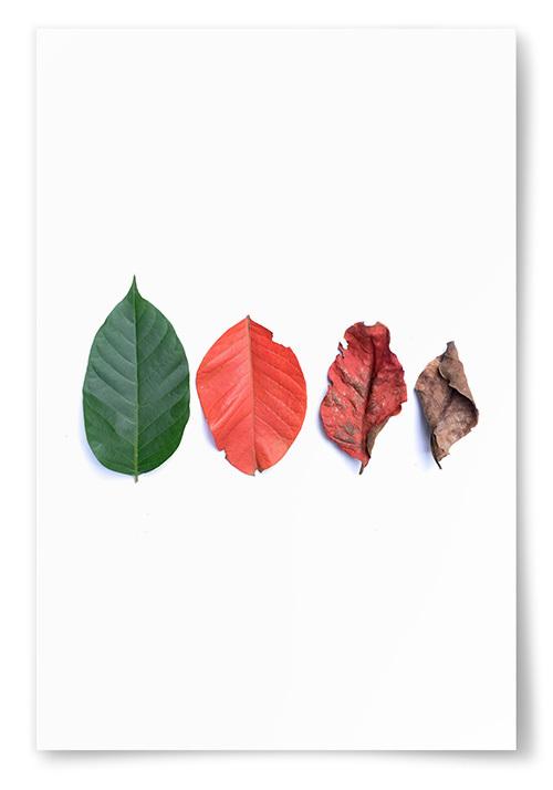 Poster Olika Löv