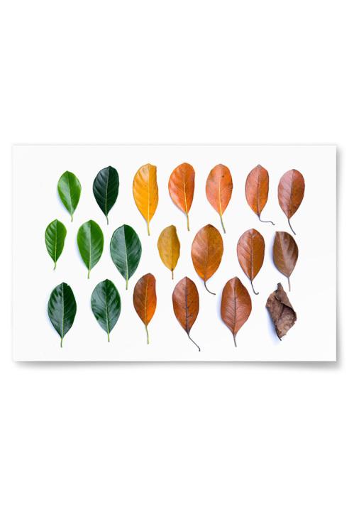 Poster Löv