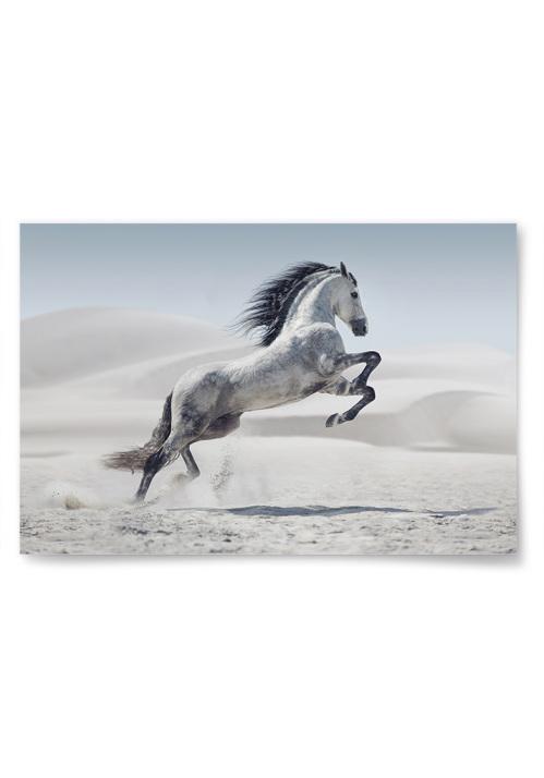 Poster Häst