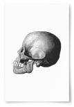 Poster Dödskalle Profil