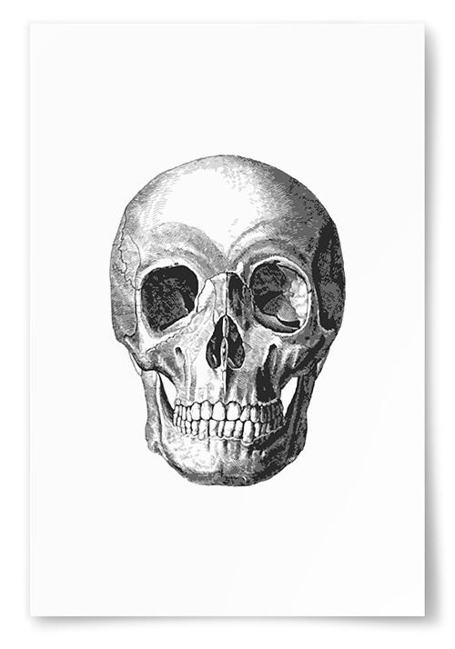 Poster Dödskalle