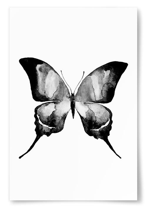 Poster Fjäril No2