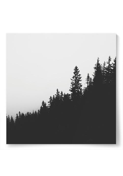 Poster Svartvit Skog