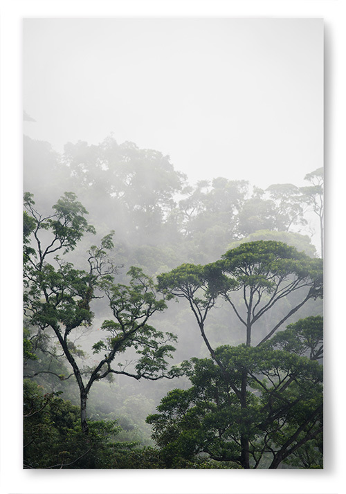 Poster Träd i Amazonas