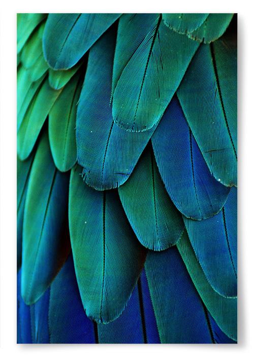 Poster Fjädrar