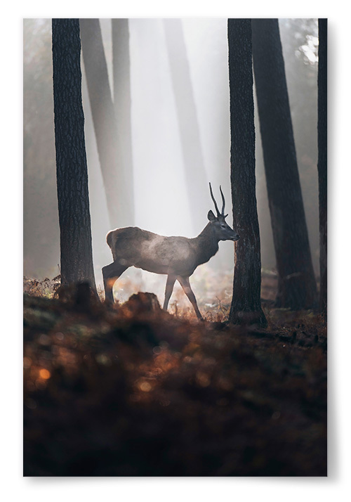 Poster Ögonblicket i Naturen